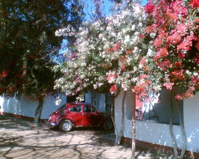Nazca Orange Plantation